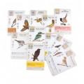 Крила: Птахи Океанії (Крылья: Птицы Океании, Wingspan: Oceania expansion)